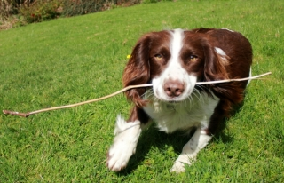 Dog with stick, Dog Friendly Accommodation