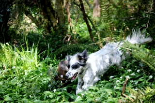 Basil and Garlic, Dog Friendly Accommodation