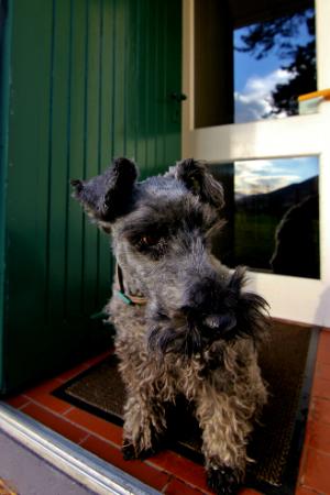 Dog at Cottage Door, Dog Friendly Accommodation