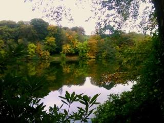Autumn Colours Castlwellan Forest Park