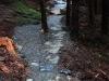 Trail Section, Rostrevor Mountain Bike Trails