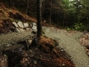 Berm, Rostrevor Mountain Bike Trails