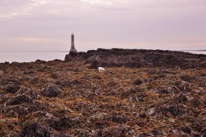 Seaweed on Cranfield Beach with Lighthouse in background.
